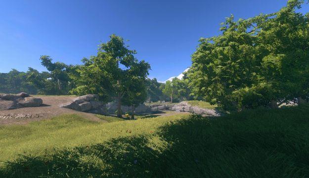 Трава леса