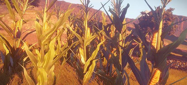 Раст-кукуруза